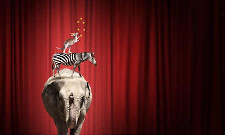 circus stage: Circus animals standing in stack and balancing on ball Stock Photo
