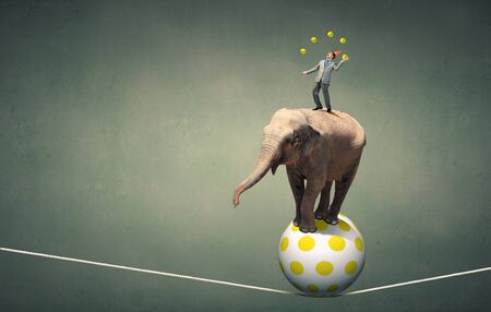 juggling: Young businessman in cap standing on elephant and juggling with balls Stock Photo