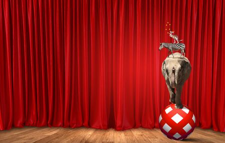 circus stage: Circus animals standing in stack and balancing on rope