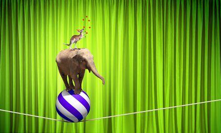 circo: Los animales de circo de pie en la pila y el equilibrio en cuerda