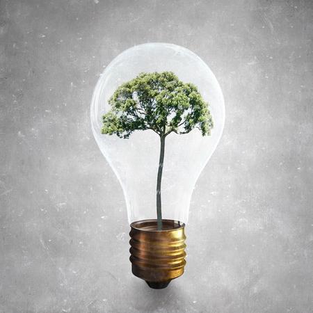 overuse: Glass light bulb with green tree inside
