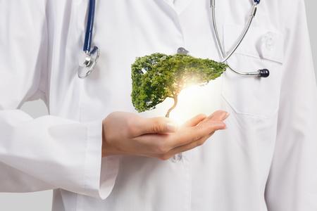女医の手で緑の木を保持のクローズ アップ 写真素材