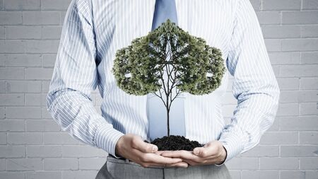 environment protection: Close up of businessman holding in hands green tree concept