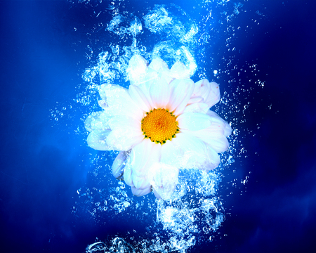 blue face: Camomile flower in clear blue water splashes Stock Photo