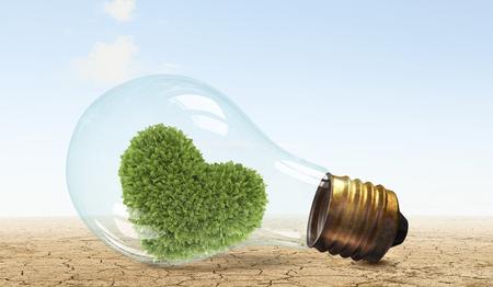 growing inside: Glass lightbulb with love shaped green tree growing inside