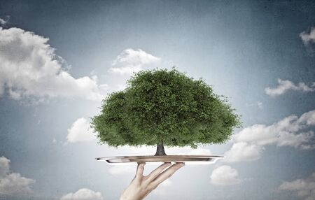 arbol de problemas: Environmental concept with hand hold tray with green tree
