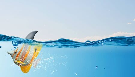 scare: Exotic fish in water wearing shark fin to scare predators