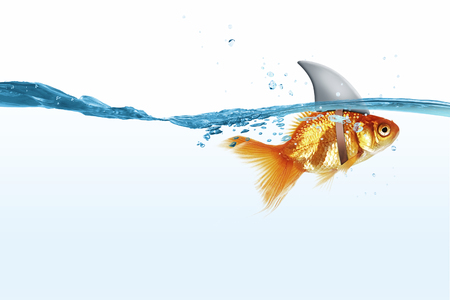 scared: Little goldfish in water wearing shark fin to scare predators Stock Photo