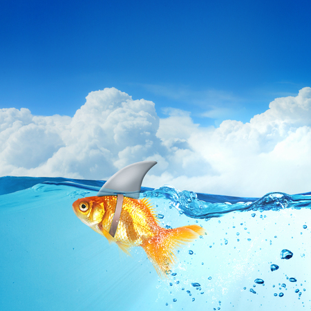 Little goldfish in water wearing shark fin to scare predators Stock fotó