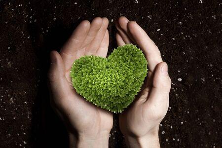 Zielone rośliny serce w rękach człowieka na tle gleby