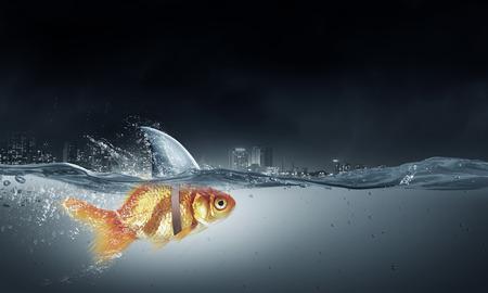 scare: Little goldfish in water wearing shark fin to scare predators Stock Photo