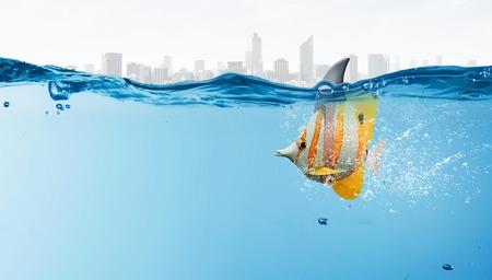 predators: Exotic fish in water wearing shark fin to scare predators