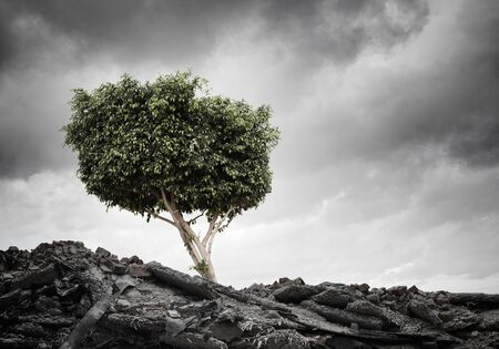 arbol de problemas: Conceptual image of green tree standing on ruins Foto de archivo