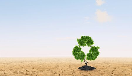 arbol de problemas: Lonely green recycle tree in desert as energy concept