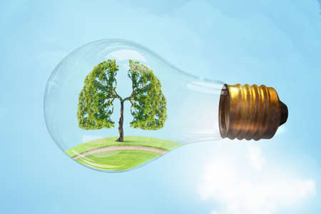 clean lungs: Green tree inside of glass light bulb as health concept