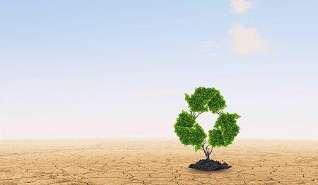 arbol de problemas: Lonely green recycle tree in desert as energy concept