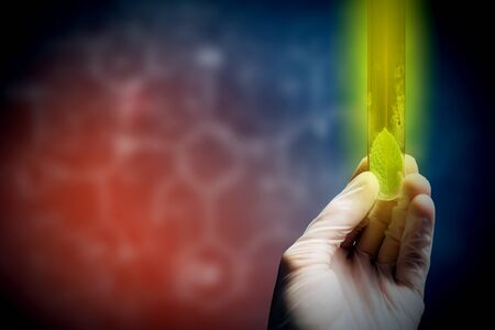 Close up of human hand holding test tube with green sprout Фото со стока - 52982343