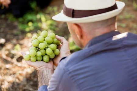 50 54 years: Man wearing hat standing in vineyard