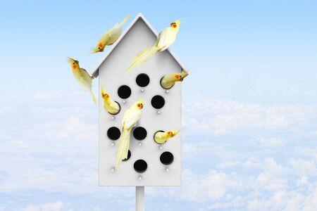 nestling: Many parrots living in one wooden nestling box Stock Photo