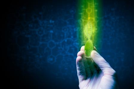 Cerca de la mano humana que sostiene el tubo de ensayo con el brote verde