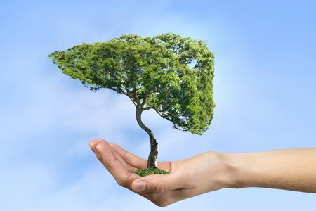 Groene boom in mannelijke palm als eco-concept