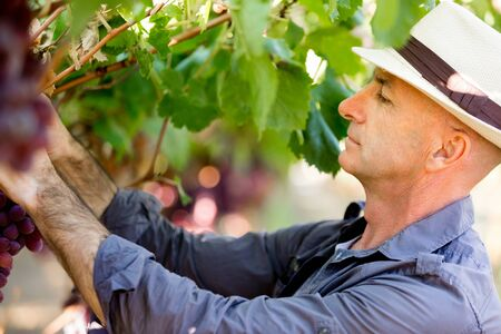food inspection: Man wearing hat standing in vineyard