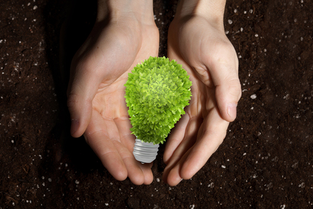 green light bulb: Green light bulb in palms on soil background