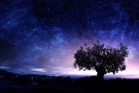 Sternenhimmel und buschig Baum unter den Felsen