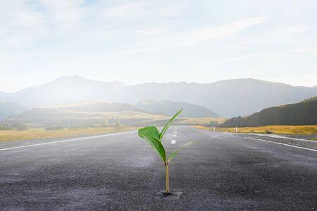 concepto de ingreso de dinero con el brote verde que crece