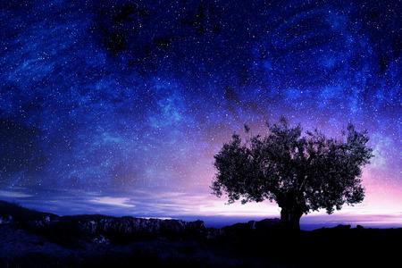 cielo estrellado y el árbol espeso entre las rocas