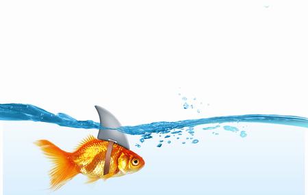 상어와 물 속에서 금 물고기 다시 플립 스톡 콘텐츠