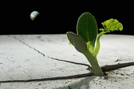dream land: Green plant sprout growing from crack on moon surface. Stock Photo