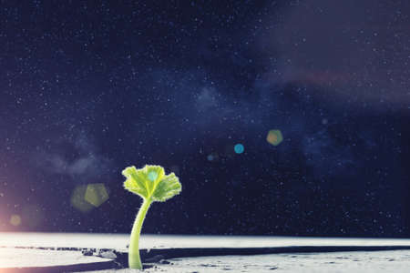 dream land: Green plant sprout growing from crack on moon surface