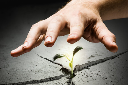 grasp: Green plant sprout growing from crack on moon surface