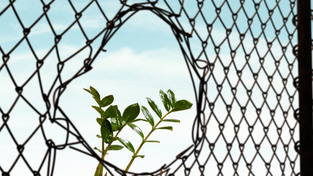 enclose: Steel wire mesh fence and growing green plant