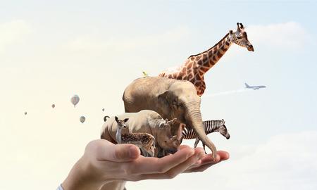 Gruppe von Zootieren zusammen in Palm