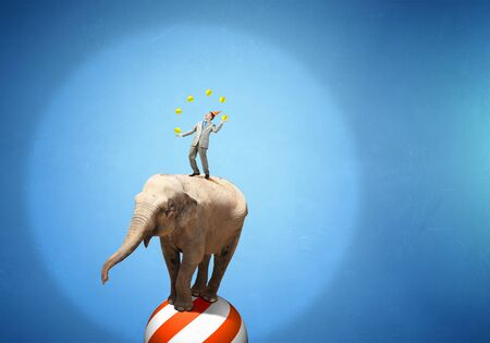 acrobatics: Circus animals standing in stack and balancing on ball Stock Photo
