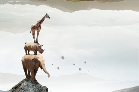 Group of zoo animals together in stack