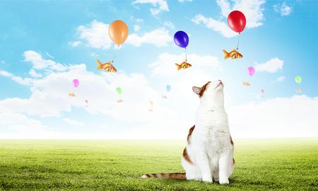 猫と金の魚 写真素材