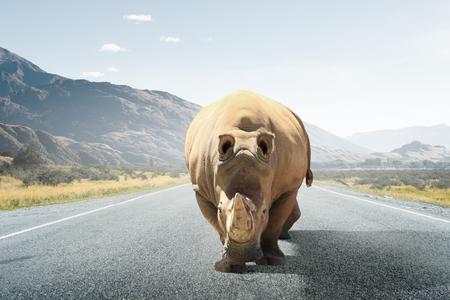 Rhino animal walking on asphalt road. Mixed media