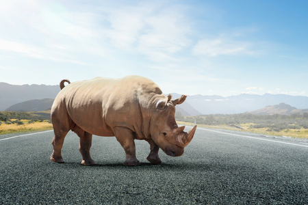 Rhino on asphalt road Stock Photo