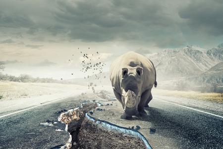 Rhino on asphalt road Reklamní fotografie