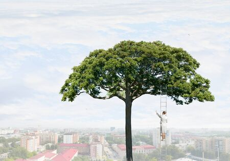 Forestation as ecologyy solution
