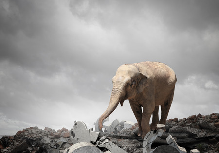 Elephant animal walking on rock top. Mixed media