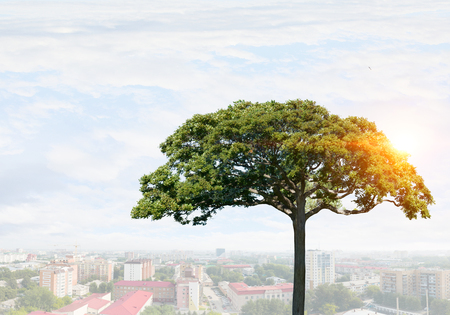 Crown of green tree on blue sky background for forestation concept . Mixed media Stock Photo
