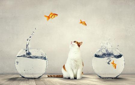귀여운 고양이와 맑은 물과 금붕어 수족관