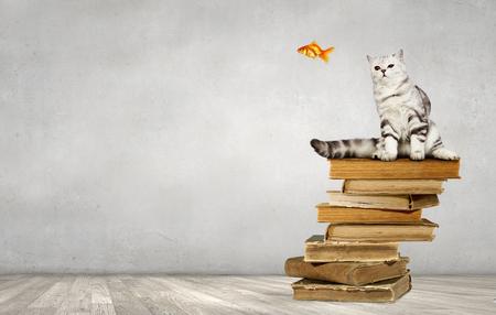 네 사랑스러운 애완 동물 스톡 콘텐츠