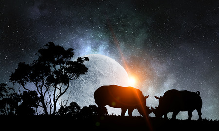Two rhinos fightning and night landscape at background Imagens