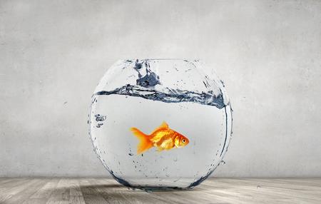 Goldfish jumping from aquarium Stock Photo