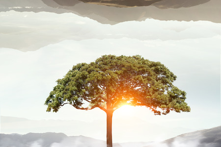 forestation: Crown of green tree on blue sky background for forestation concept . Mixed media Stock Photo